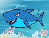 Tiburón dentudo