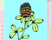 Flor de bosque