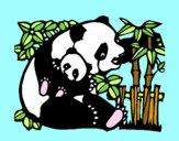 Mama panda