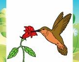 Dibujo Colibrí y una flor pintado por windy