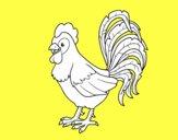 Gallo de una granja