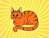 Dibujo Gato joven pintado por Plimboo503