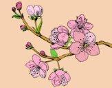 Dibujo Rama de cerezo pintado por yussette