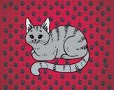 Dibujo Gato joven pintado por Antomarisa