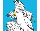 Cacatúa