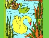 Cisnes