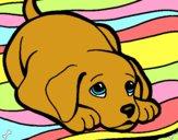 Dibujo Perrito alfombra pintado por Michellinh