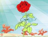 Dibujo Una rosa pintado por Michellinh