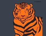 Dibujo Tigre 3 pintado por Joer