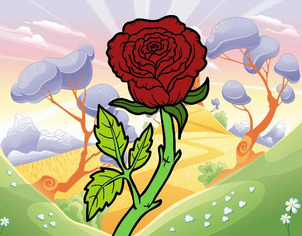 Dibujo Rosa silvestre pintado por lina200714