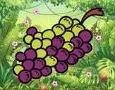 Uvas moradas