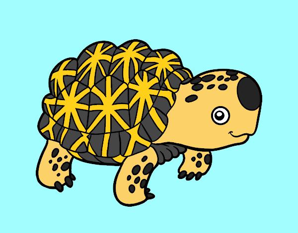 Dibujo Tortuga estrellada de la India pintado por gav007a
