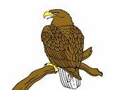 Águila en una rama