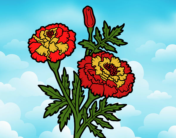 Dibujo Flor de las maravillas pintado por Juice