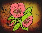 Flores de pensamiento