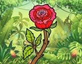 Dibujo Rosa silvestre pintado por BERNORI