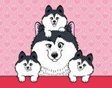 Familia Husky