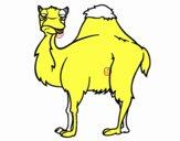 Camello aburrido