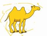 Camello africano