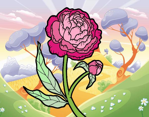 Dibujo Peonia pintado por mirperla