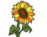 Dibujo Un girasol pintado por JuliBanana