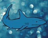 Un tiburón nadando