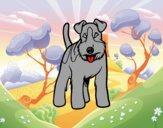 Perro Fox terrier