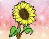 Dibujo Un girasol pintado por Michellinh