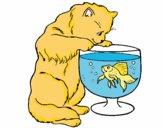 Dibujo Gato mirando al pez pintado por AudryOdori