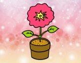 Una flor de primavera