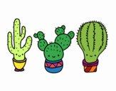 3 mini cactus
