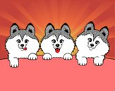 Dibujo 3 perritos pintado por clarinda
