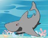 Dibujo Tiburón enfadado pintado por wuilde