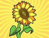 Dibujo Un girasol pintado por joselin10