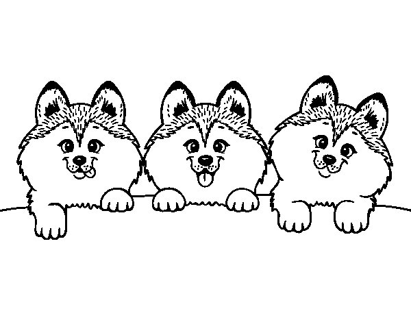 Dibujo de 3 perritos para Colorear