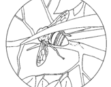 Dibujo de Abejorro 1 para colorear