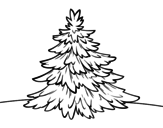 Dibujo de Abeto común para colorear