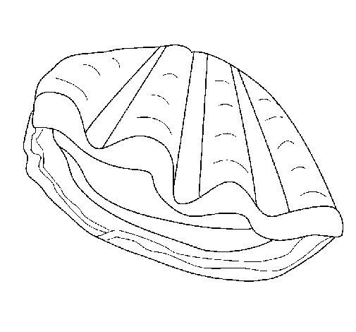 Dibujo de Almeja para Colorear