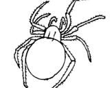 Dibujo de Araña venenosa para colorear