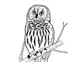 Dibujo de Búho listado para colorear