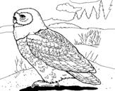 Dibujo de Búho nival para colorear