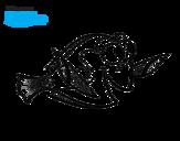 Dibujo de Buscando a Nemo - Dory