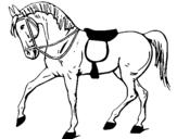 Dibujo de Caballo de competición para colorear