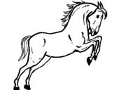 Dibujo de Caballo saltando para colorear