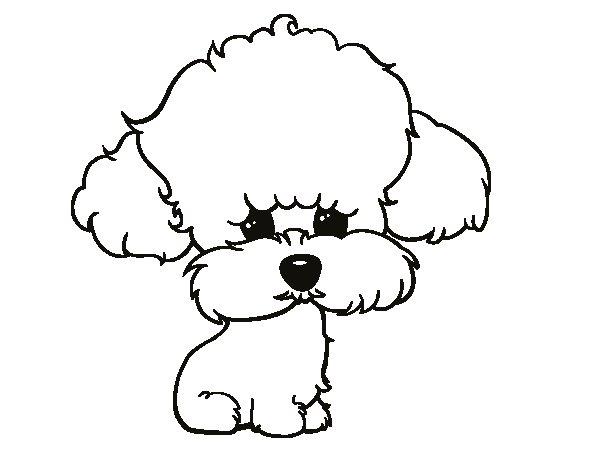 Dibujo de Cachorro de poodle para Colorear - Dibujos.net