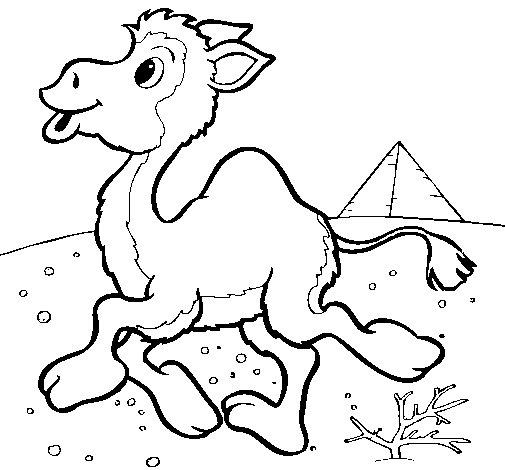 Dibujo de Camello 1 para Colorear