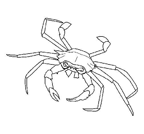 Dibujo de Cangrejo de mar para Colorear