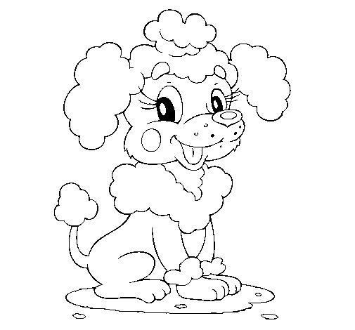 Dibujo de Caniche para Colorear
