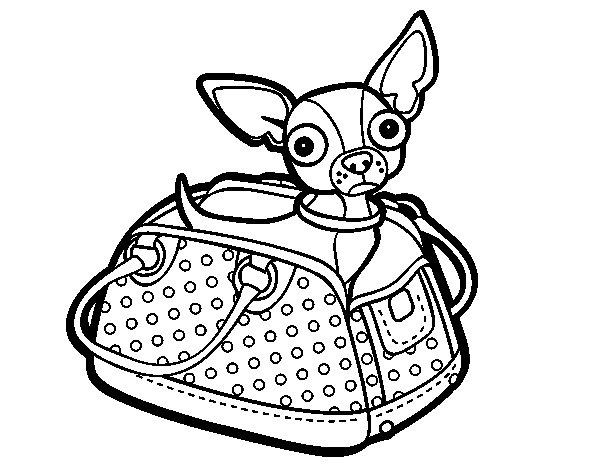 Dibujo Para Colorear Viajar: Dibujo De Chihuahua De Viaje Para Colorear