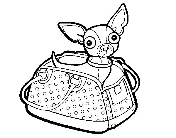 Dibujo De Chihuahua: Chihuahua Para Dibujar